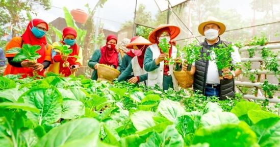 Sein Farm, Kembangkan Urban Farming Berkelanjutan di Kota Bandung