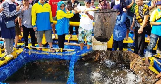 Wow,  Rektor Unpad & Produsen Aquatec Petik Hasil Maksimal Panen Budidaya Kerapu di Pangandaran