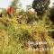 Satgas Citarum Harum Sektor 21 – 11 Lagadar: Bersihkan Sampah & Rumput Anak Kali Cimahi
